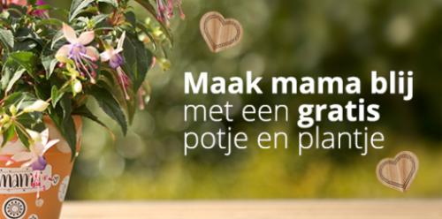 Gratis potje en plantje voor Moederdag bij Welkoop