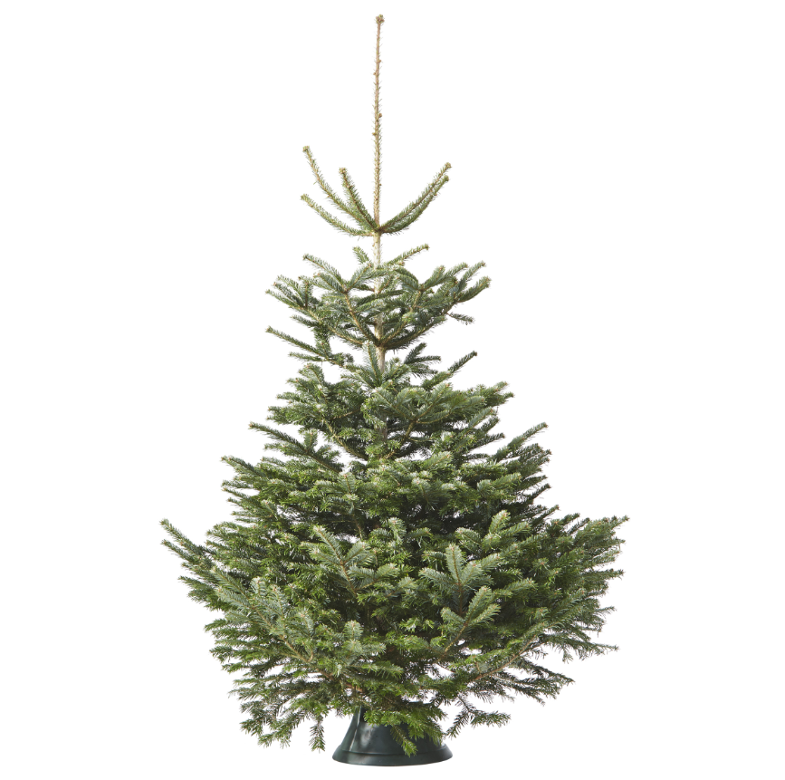 Nordmannspar kerstbomen vanaf €12,95 in huis
