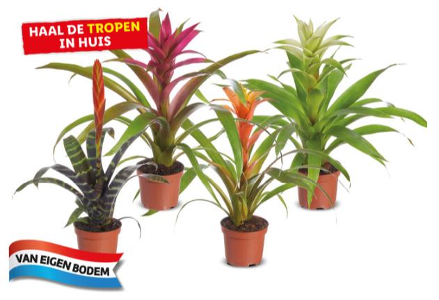Diverse Tropische planten voor €2,99