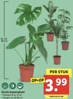 Grote kamerplant voor €3,99