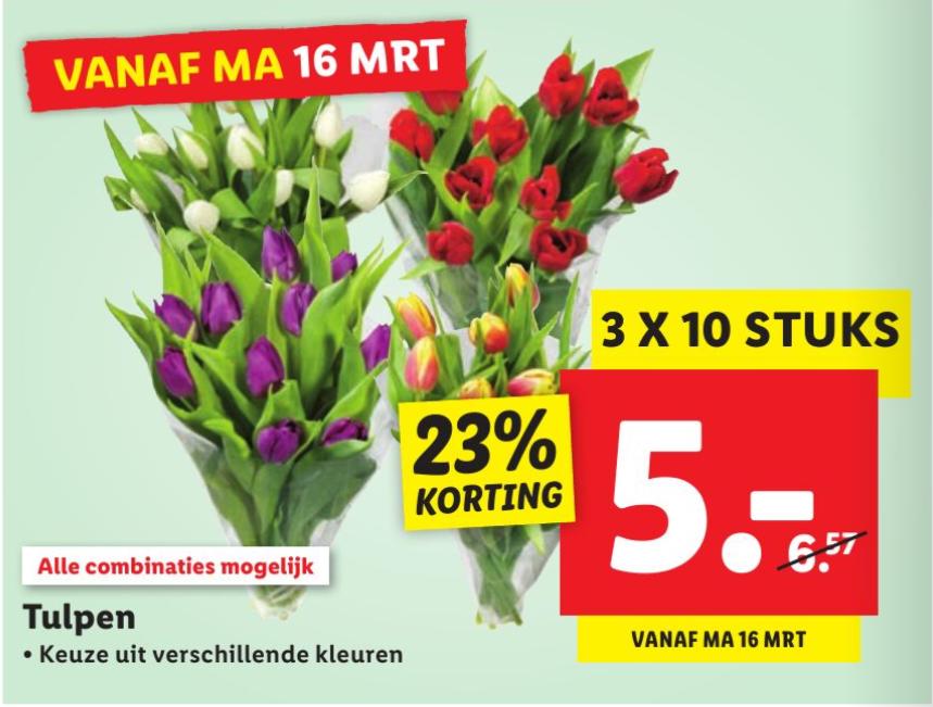 3 Bossen tulpen voor €5 bij LIDL